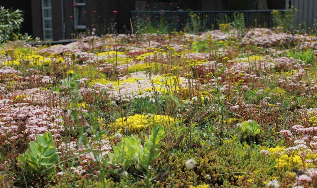 The eco-roof blooming with white and yellow field flowers
