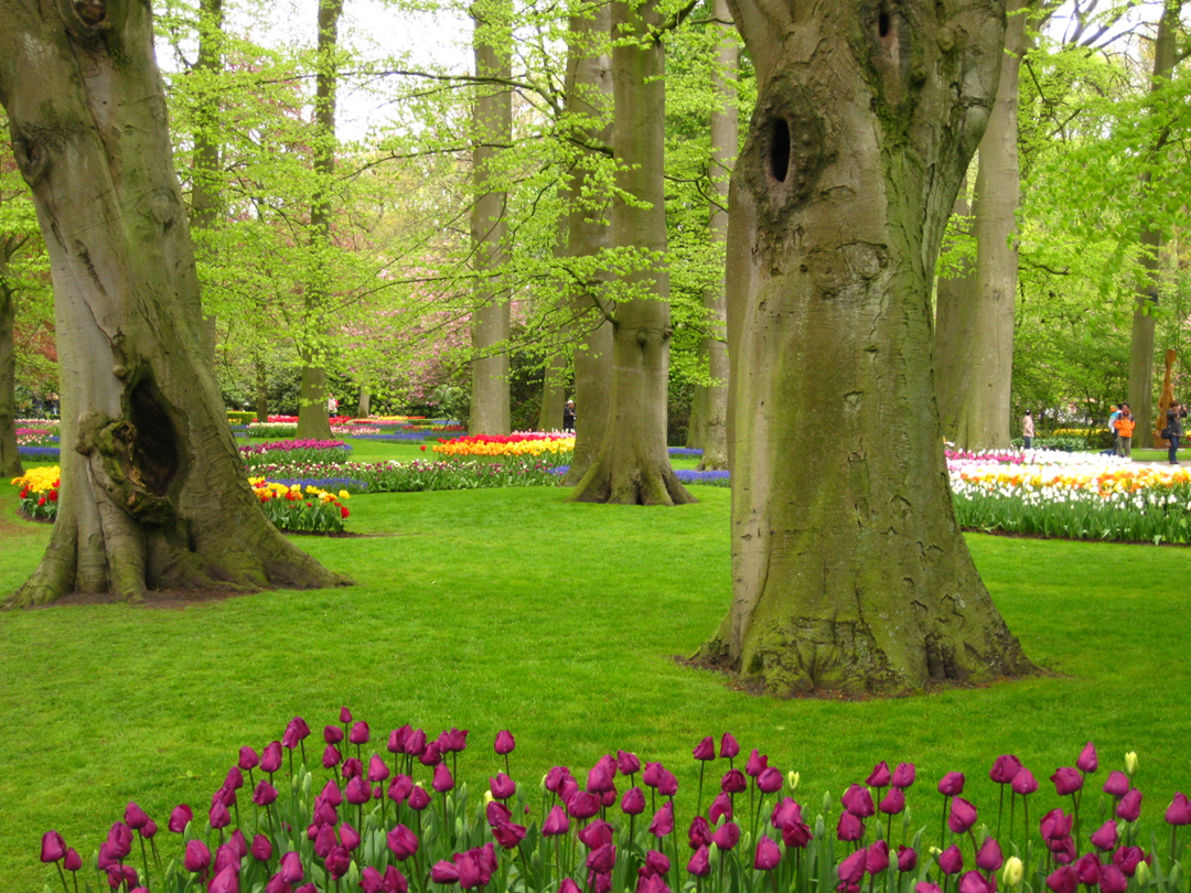 Keukenhof-Dutch-Tulip-Festival_New-colourful-flowers-under-old-trees_Photo-by-Conscious-Travel-Guide-Amsterdam.jpg