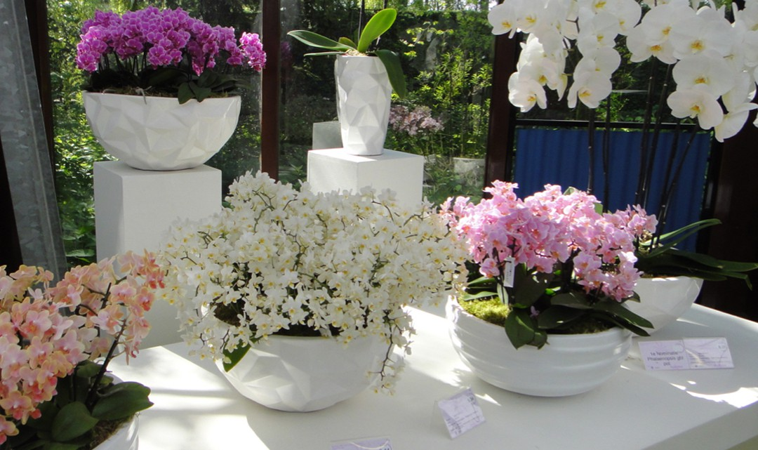 A variety of orchids on display