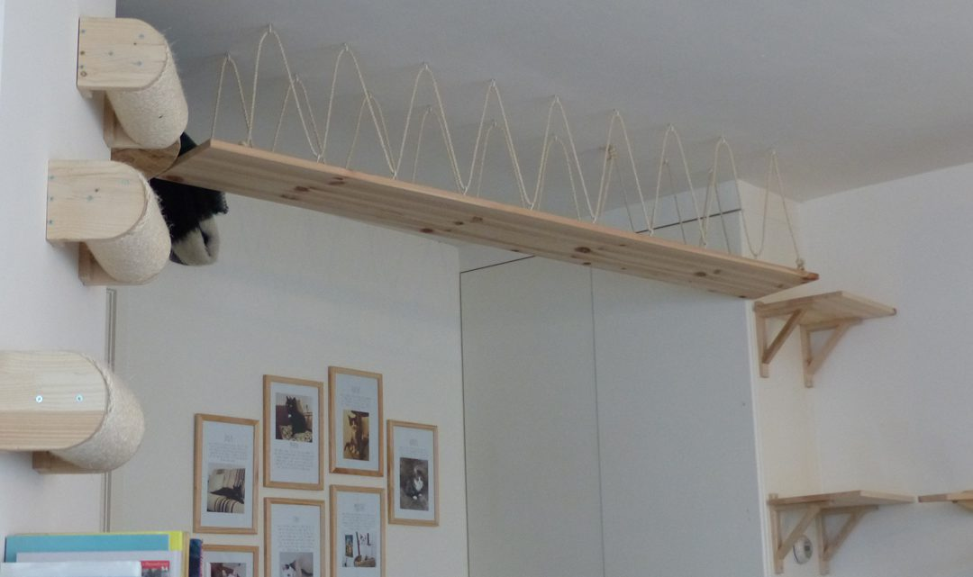 Cat climbing gym