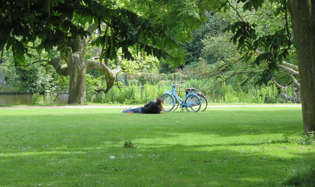A couple laying on the grass under a tree