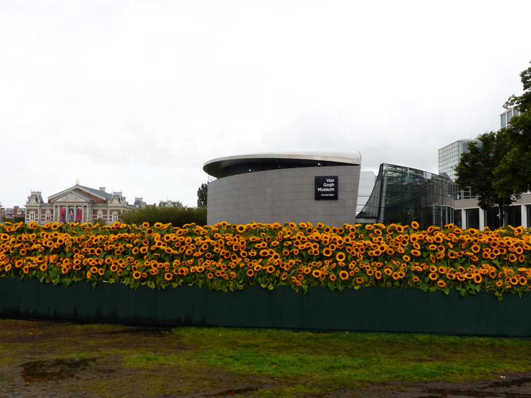 Sunflowers The New Extention And Concertgebouw
