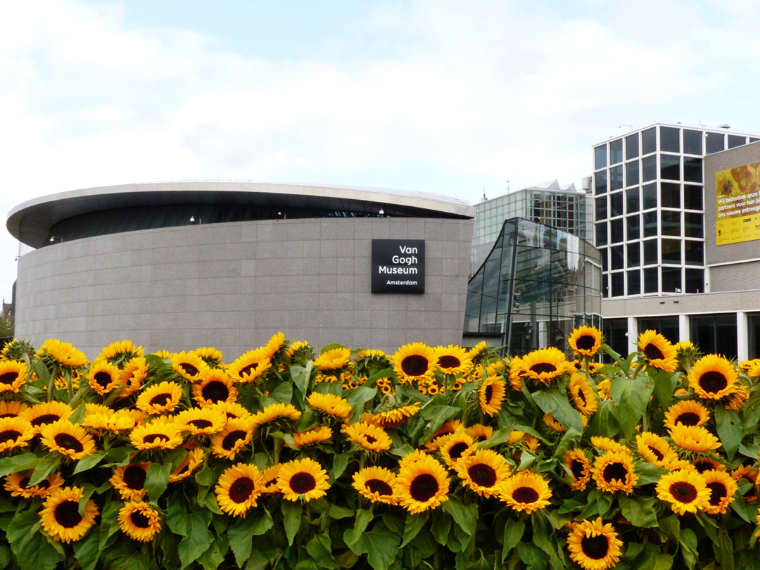 Sunflowers And The New Entrance