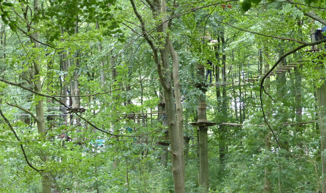 Steps, ladders, platforms in the trees