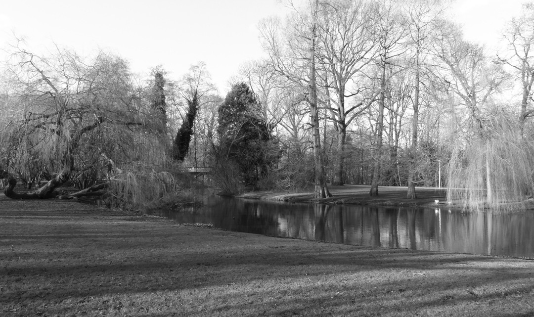 B&W photo of grass, a pond, a bridge and trees. Forming a beautiful stillife