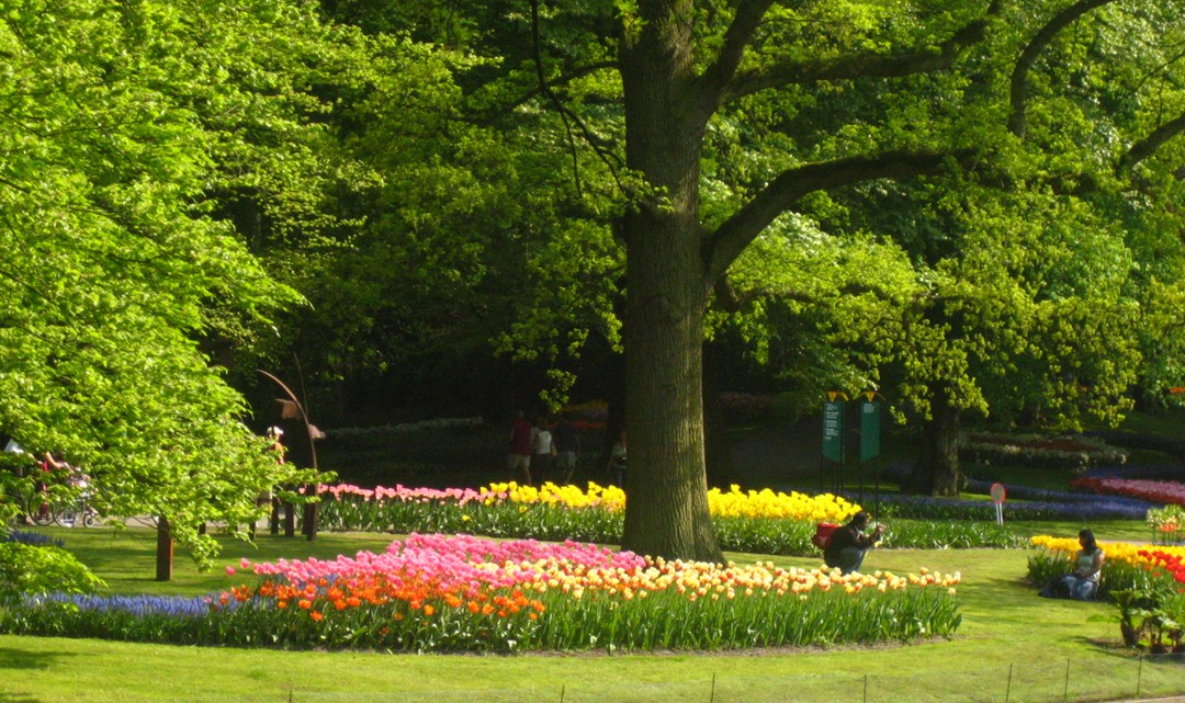 A man taking photos of his girlfriend in front of the tulips