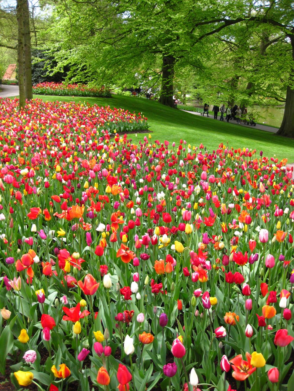 Keukenhof Dutch Tulip Festival Spring Garden Conscious