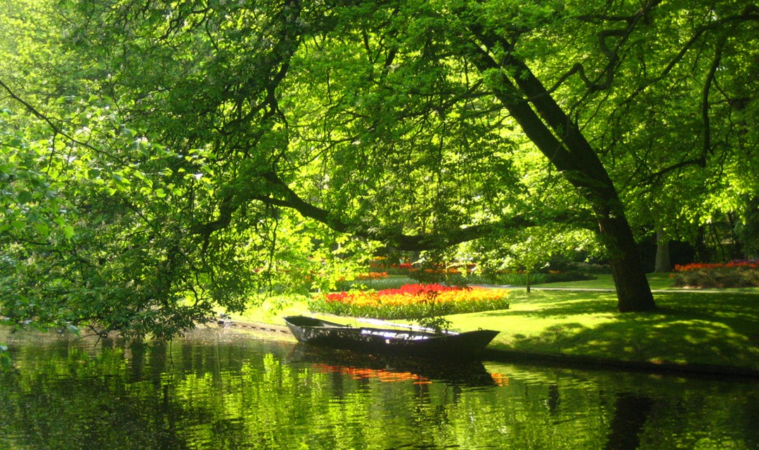 Boat in the pond under a lush tree that hangs over the water