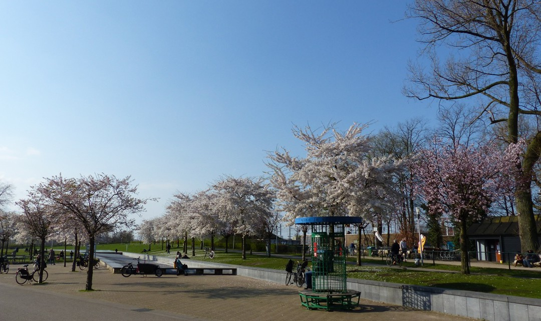 The water garden in Westerpark with spring blossom